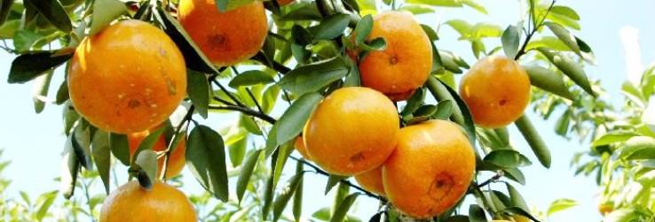 4 thời điểm không nên ăn cam quýt